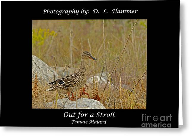 Out For A Stroll Greeting Card by Dennis Hammer