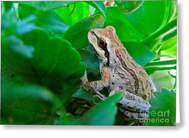 Pacific Tree Frog Greeting Card by Sean Griffin