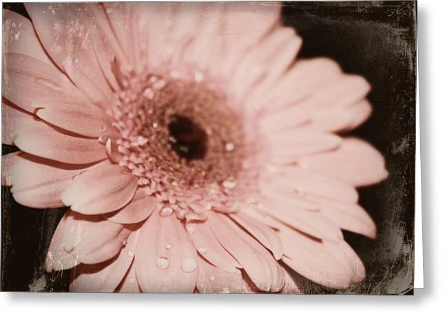 Pale Pink Greeting Card by Cathie Tyler