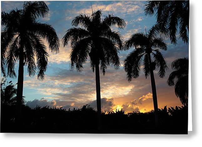 Greeting Card featuring the photograph Palm Tree Silhouette by Karen Lee Ensley