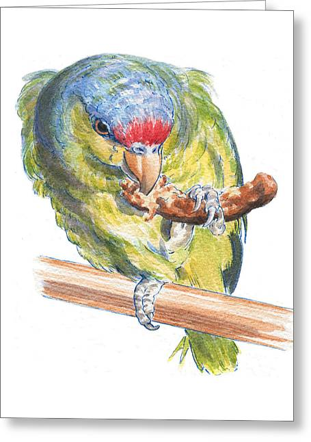 Parrot Eating Toast Greeting Card by Maureen Carter
