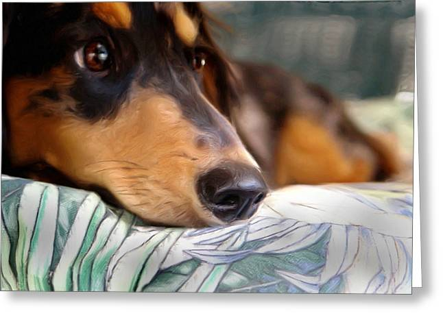 Patient Dachshund  Greeting Card by Carmen Del Valle