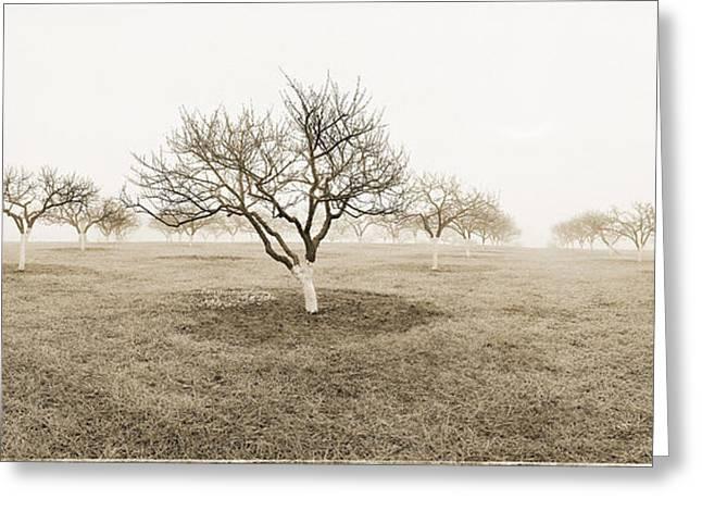 Peach Orchard Gettysburg Greeting Card by Jan W Faul