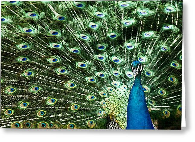Peacock Greeting Card by Ivan Vukelic