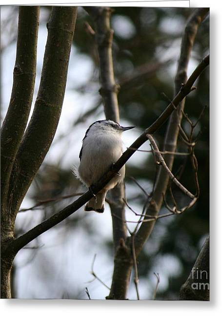 Perched And Content  Greeting Card by Neal Eslinger