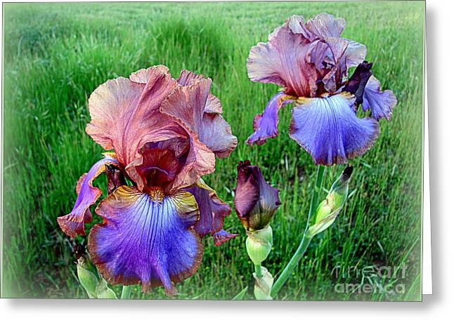 Greeting Card featuring the photograph Perfection by Irina Hays