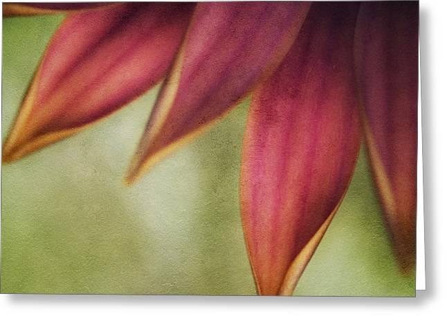 Petals Greeting Card by Bonnie Bruno
