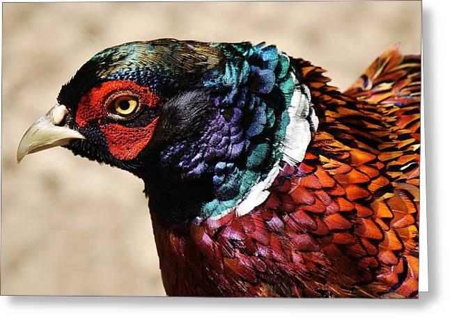 Pheasant Greeting Card by Paulette Thomas