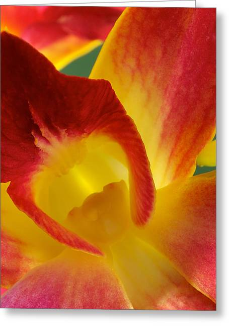 Photograph Of A Hope Orchid Flower Greeting Card