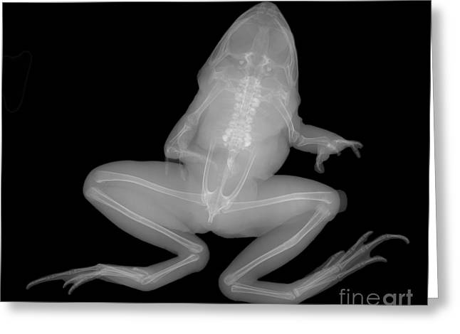 Pickerel Frog Greeting Card by Ted Kinsman