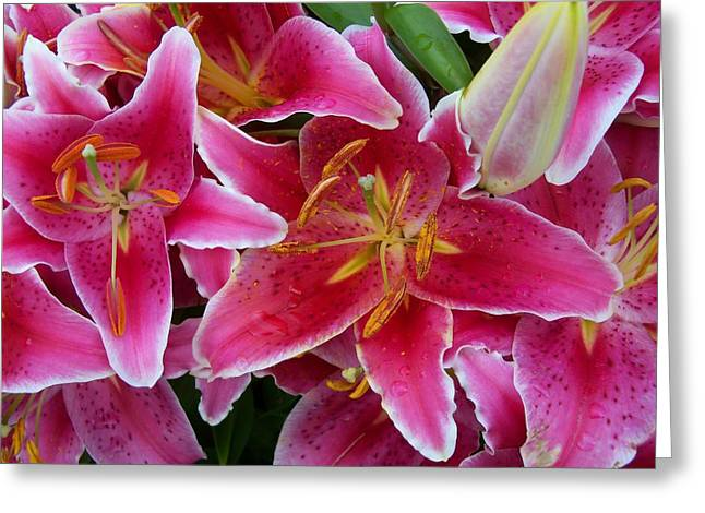 Pink Lilies With Water Droplets Greeting Card