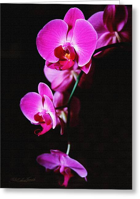 Greeting Card featuring the photograph Pink Orchid Trio by Robert Kernodle