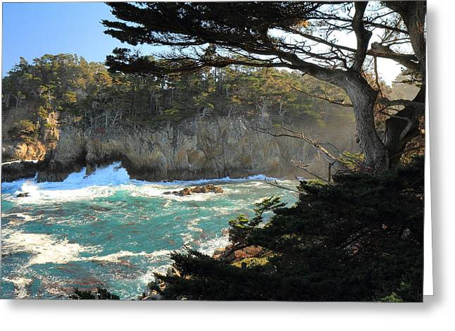Greeting Card featuring the photograph Point Lobos Cypress by Scott Rackers