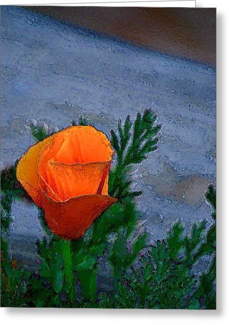 Poppy 15 Greeting Card by Pamela Cooper