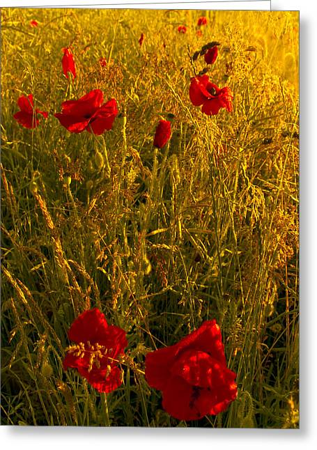 Poppy Field Greeting Card by Svetlana Sewell