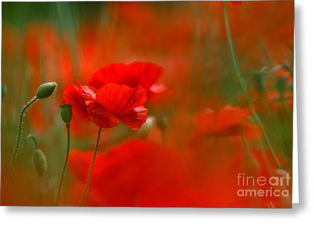 Poppy Flowers 02 Greeting Card by Nailia Schwarz