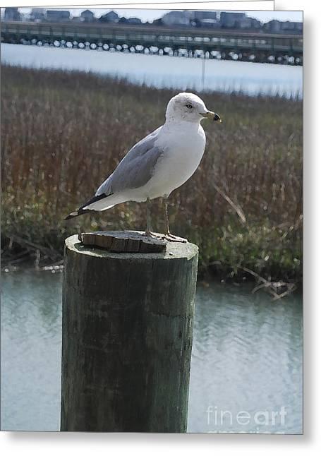 Posing Seagull Greeting Card