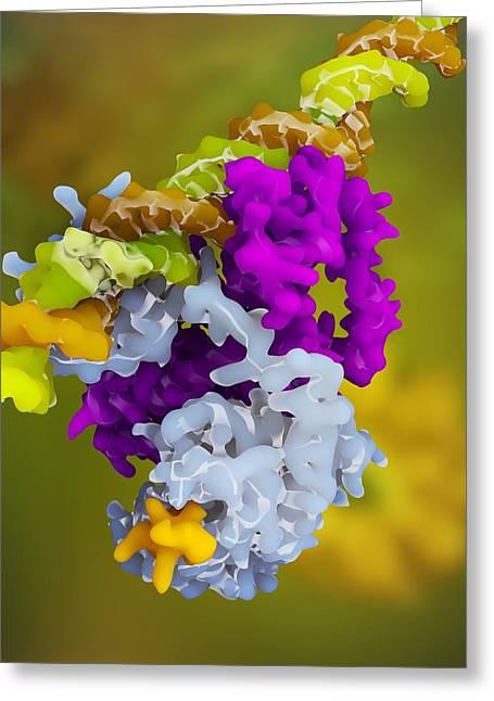 Ppar Regulatory Molecule Greeting Card