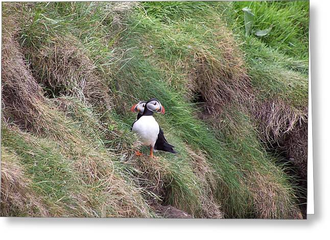 Puffins Greeting Card by George Leask