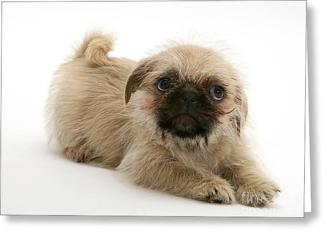 Pugzu And Pug Puppies Greeting Card