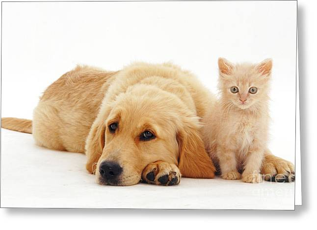 Pup And Kitten Greeting Card