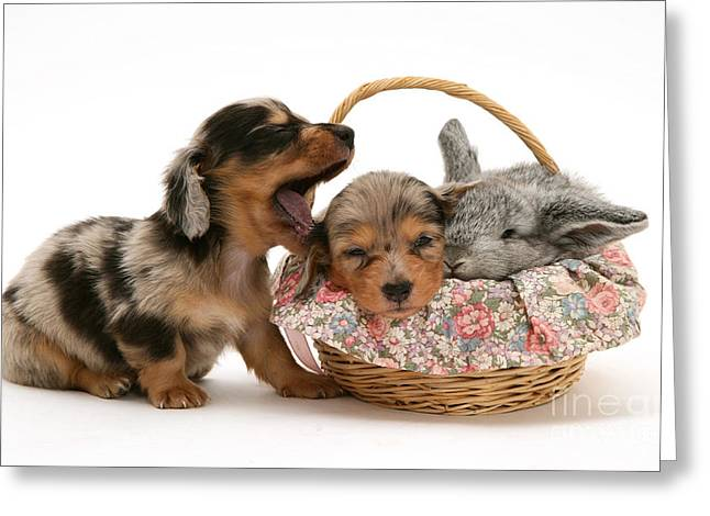 Puppies And Rabbit Greeting Card by Jane Burton