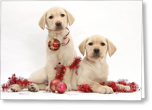 Puppies At Christmas Greeting Card