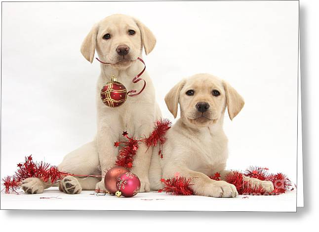 Puppies At Christmas Greeting Card by Mark Taylor