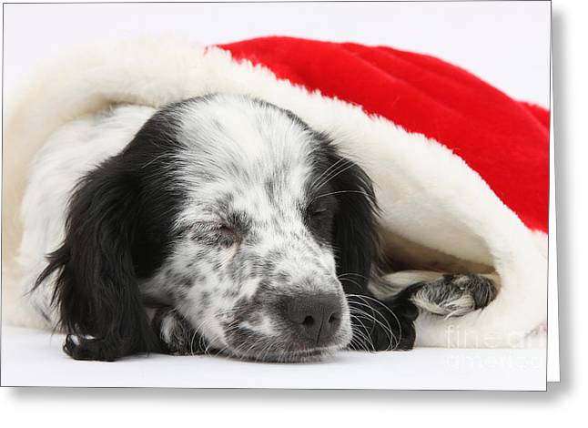 Puppy Sleeping In Christmas Hat Greeting Card by Mark Taylor