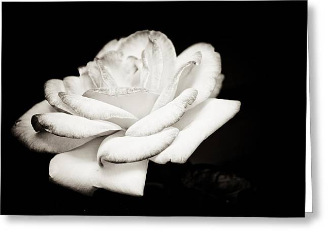 Greeting Card featuring the photograph Pure Beauty by Sara Frank