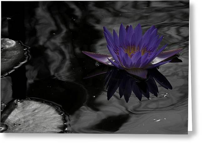Purple Lilly In A Pond Greeting Card