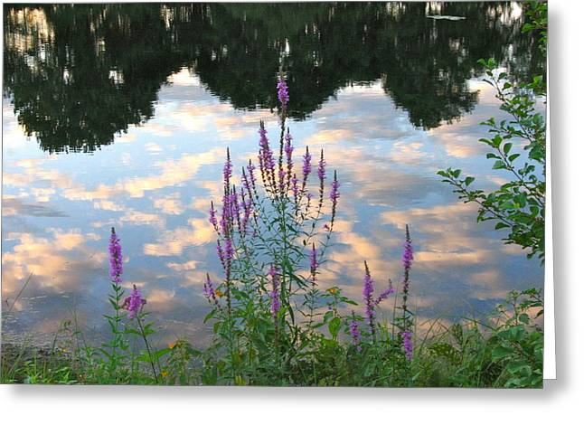 Purple Loosestrife Greeting Card