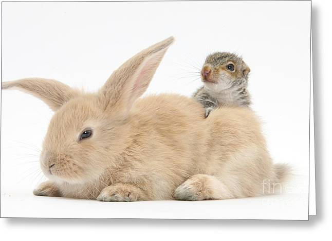 Rabbit And Squirrel Greeting Card