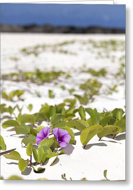 Railroad Vine Blossom Greeting Card