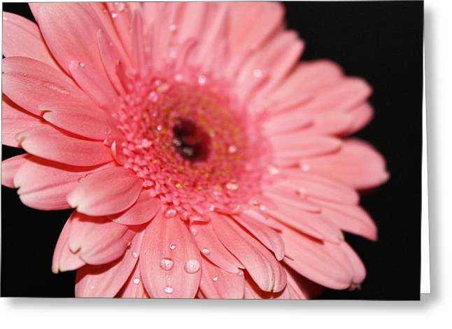 Rain Drops Greeting Card by Cathie Tyler