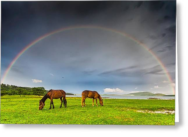 Rainbow Horses Greeting Card by Evgeni Dinev