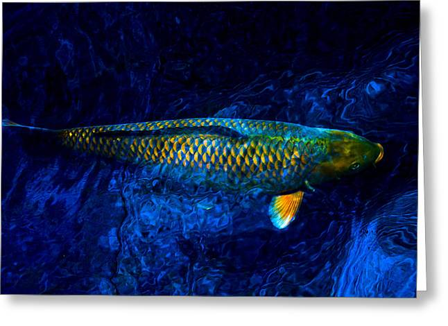 Rar Fish Greeting Card by Chua  ChinLeng