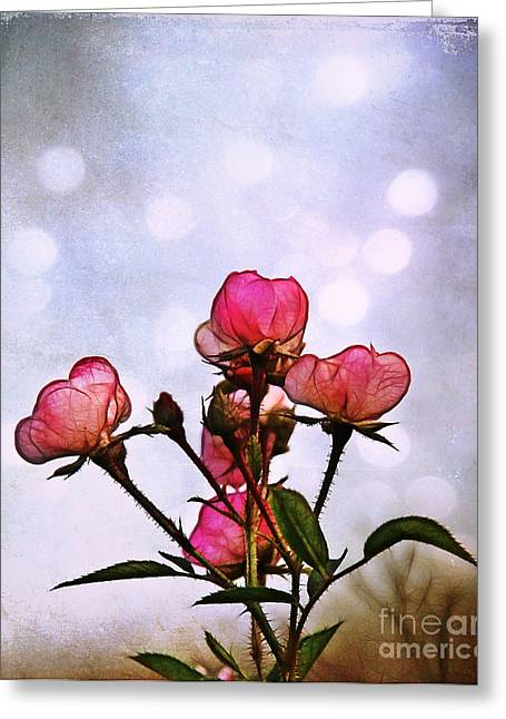 Reaching For The Light Greeting Card by Judi Bagwell