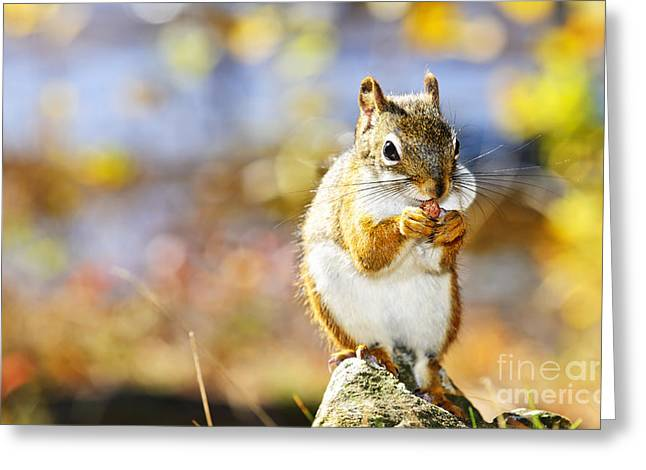 Red Squirrel Greeting Card by Elena Elisseeva