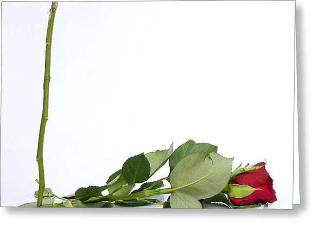 Red Tulip Greeting Card by Bernard Jaubert