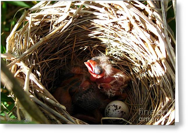 Red-winged Blackbird Babies And Egg Greeting Card by J McCombie
