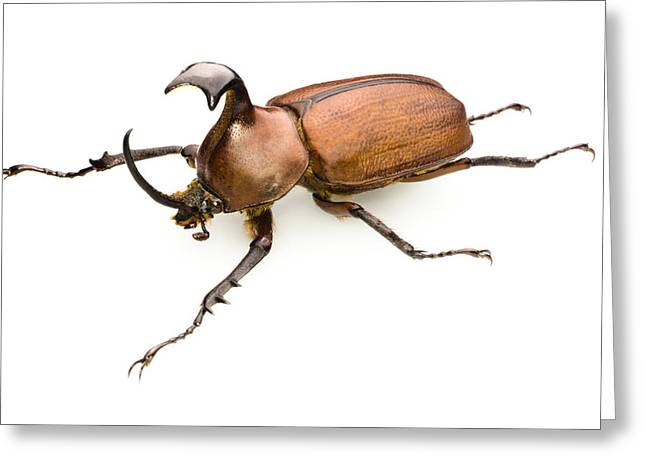 Rhinoceros Beetle Greeting Card by Lawrence Lawry