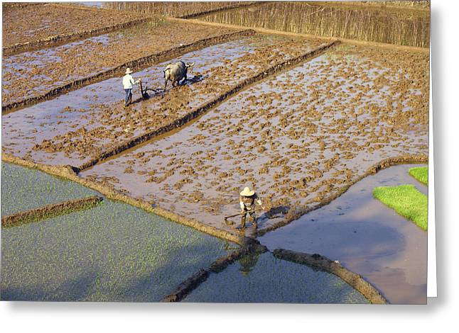 Rice Farmers Greeting Card
