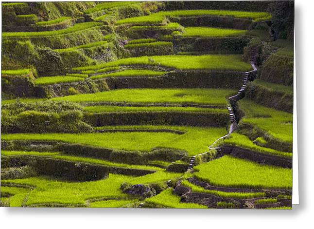 Rice Terraces In Banaue Greeting Card