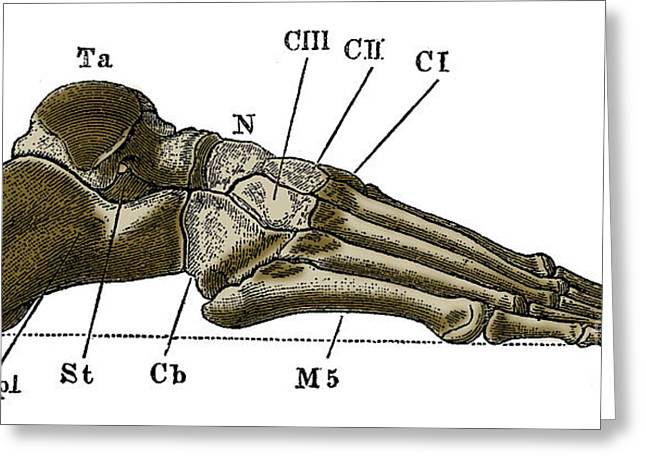 Right Foot Greeting Card by Science Source