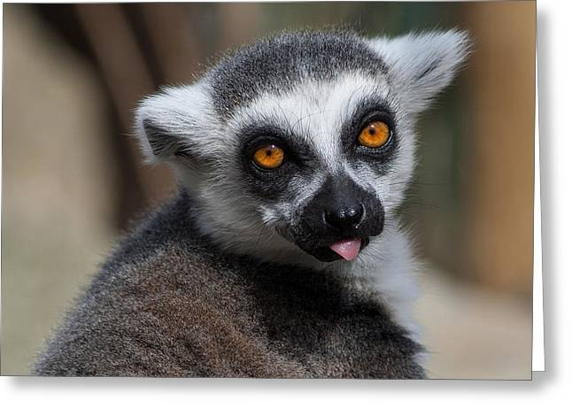 Ring Tailed Lemur Greeting Card