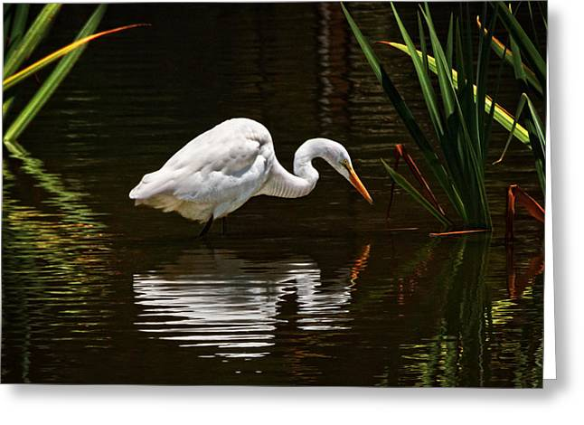 Ripples On The Pond  Greeting Card by Donna Pagakis