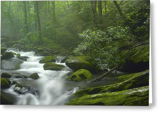 Roaring Fork River Flowing Greeting Card by Tim Fitzharris