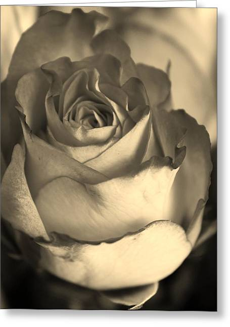 Rose In Sepia Greeting Card by Bruce Bley