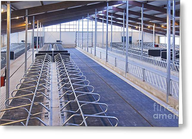 Row Of Cattle Cubicles Greeting Card